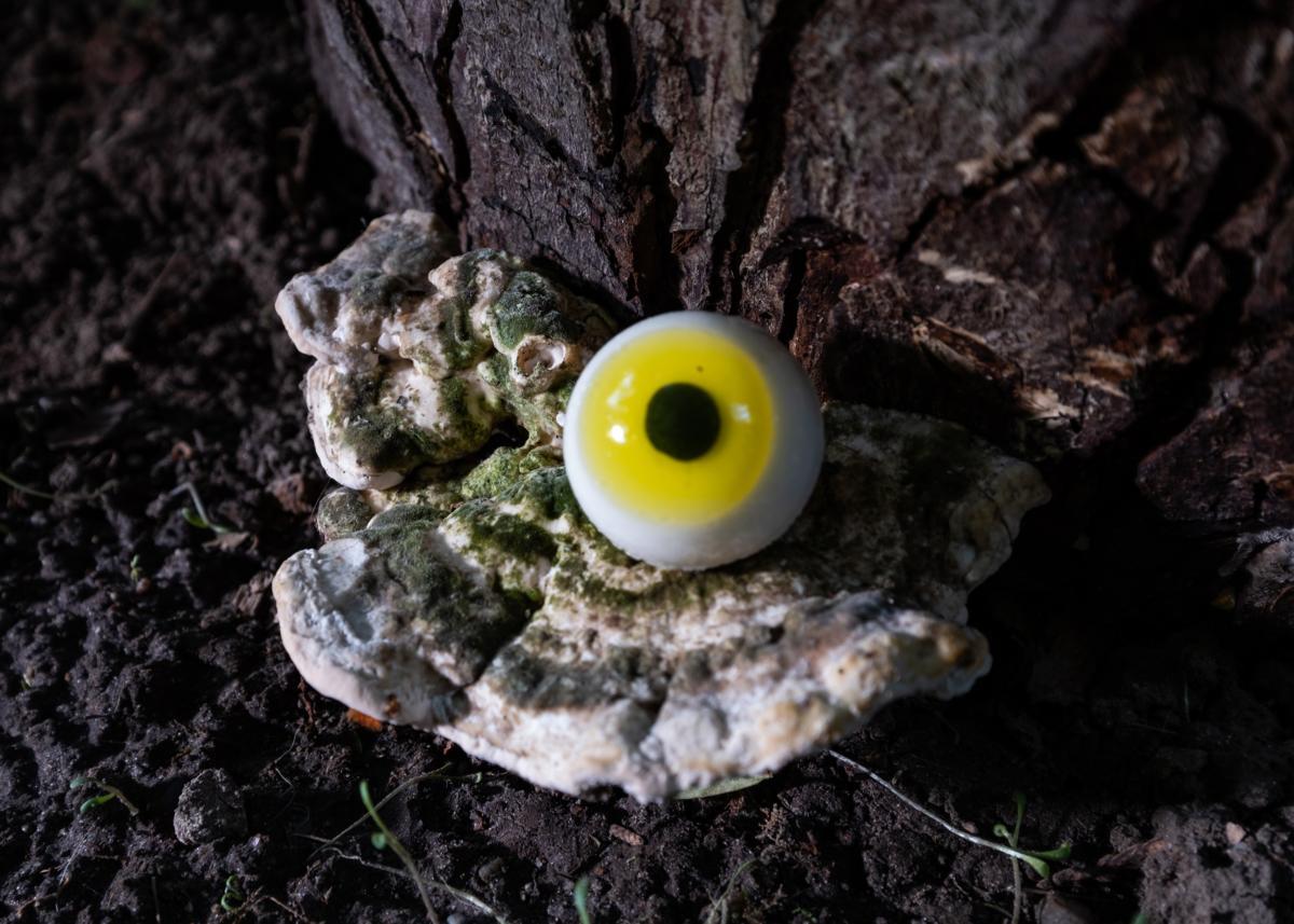 [EN/PL] 'A Dream Within a Dream': site-specific exhibition in a garden
